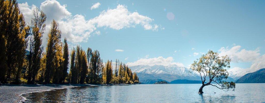 Moving to New Zealand. That Wanaka tree on Lake Wanaka, New Zealand